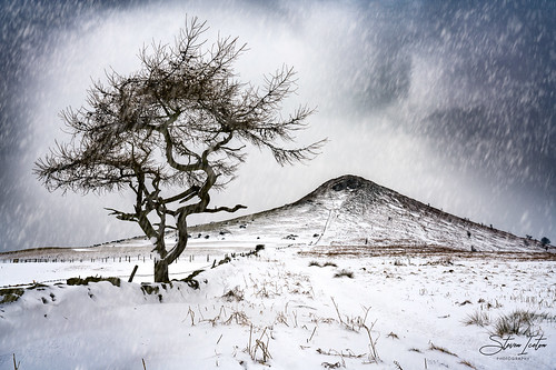 winter snow beastfromtheeast storm roseberrytopping lonetree northyorkshire northeastengland northyorkmoors nationalpark