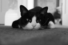 Canon EOS 60D - B&W - Calypso (Really Bored!)
