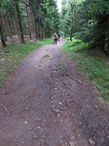 20170605 07 136 Regia Wald Weg Radfahrer