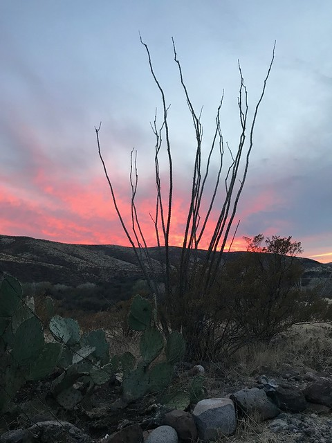 Gila Box Riverview - ocotillo sunset