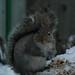 Cheeky Squirrel by John Neziol