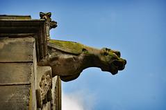 Attention, Gargouilles ! La basilique Notre-Dame de Liesse (II)  1/2 - Photo of Vesles-et-Caumont