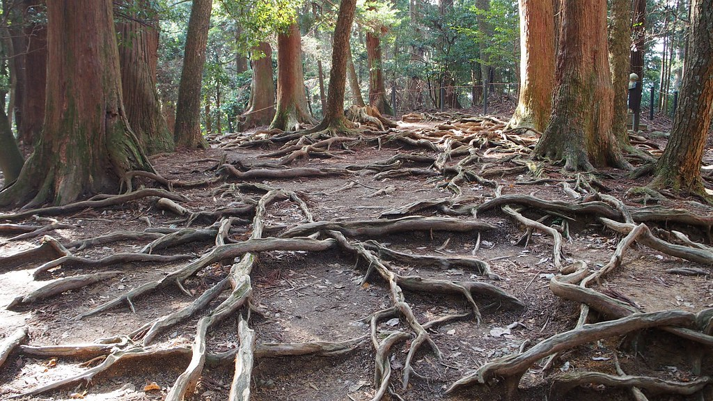 Lightning roots