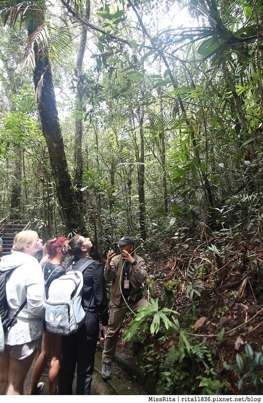 馬來西亞自由行 馬來西亞 沙巴 沙巴自由行 沙巴神山 神山公園 KinabaluPark Nabalu PORINGHOTSPRINGS 亞庇 波令溫泉 klook 客路 客路沙巴 客路自由行 客路沙巴行程20