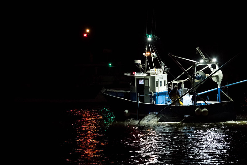 Pêche à la Civelle - essai haut ISO 6400 38957380814_1acdeefb6b_c