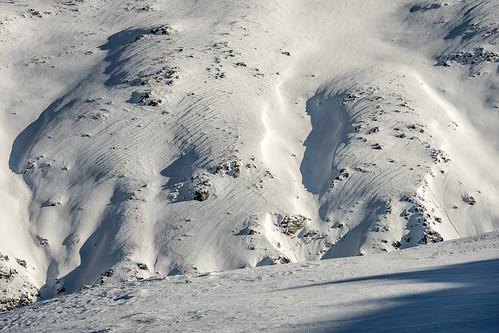 Traces in the snow: animals (2/2)