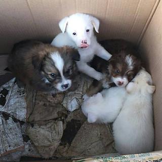 Altra cucciolata abbandonata nelle campagne turesi