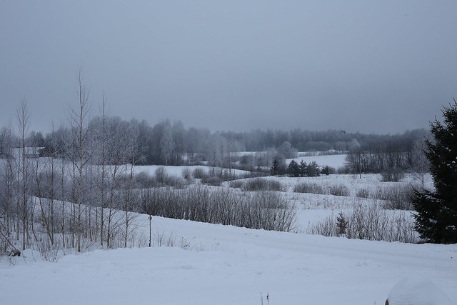 Gray and white Winter evening