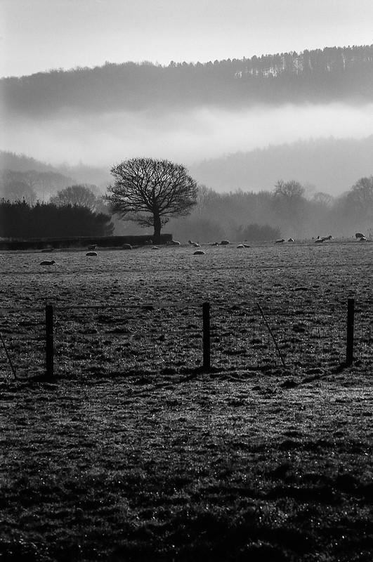 FILM - Pastoral mist (portrait)