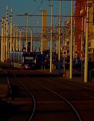 January Tram Colour