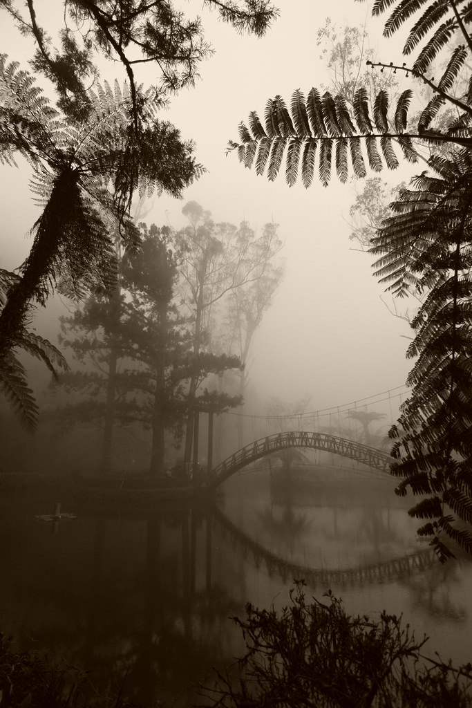 南投行 - 向山、車程、銀杏森林、溪頭