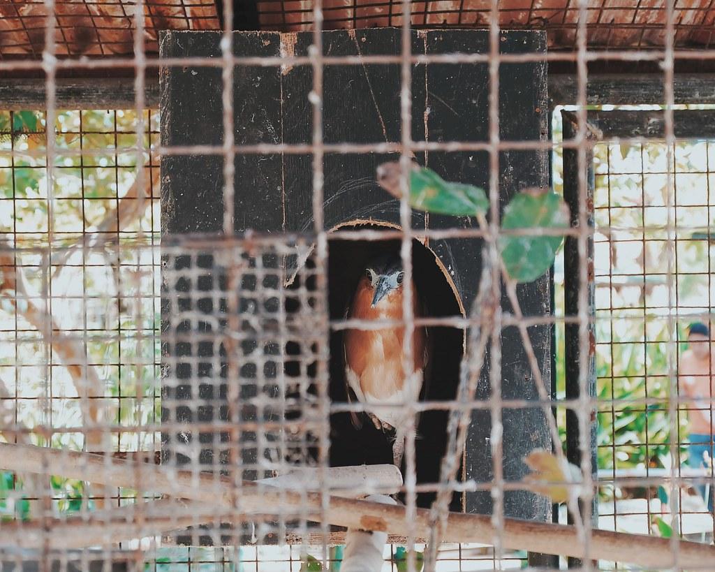 island cove 2018  promo aviary