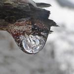Goutte glacée (eve ferra)