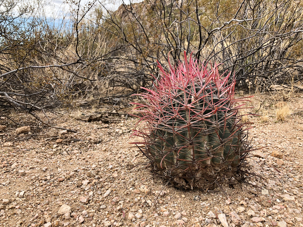 A small cactus in Pinnacle Peak Park in Scottsdale, Arizona