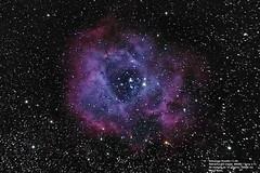 C-49 Nebulosa Roseta