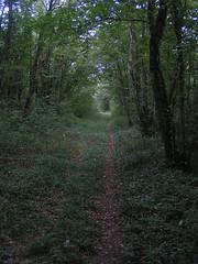 20070903 13055 0710 Jakobus Wald Weg