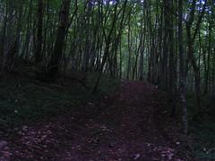 20070903 13059 0710 Jakobus Wald Weg