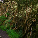 Jungle in Inca trail Day 2