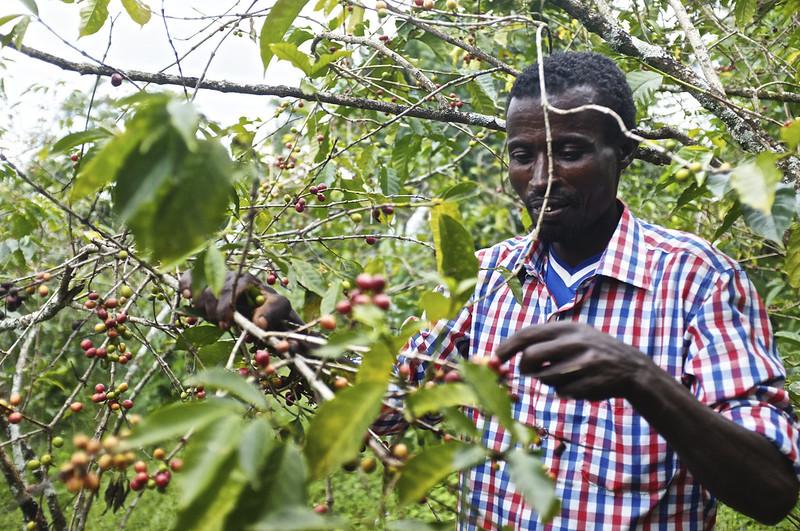 Nông dân Kochere Ethiopia