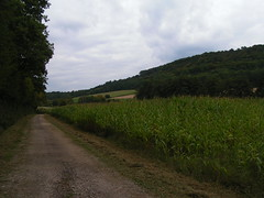 20070831 11990 0707 Jakobus Feld Wald Weg