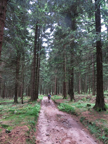20170605 07 148 Regia Wald Weg Pilger ElisabethB