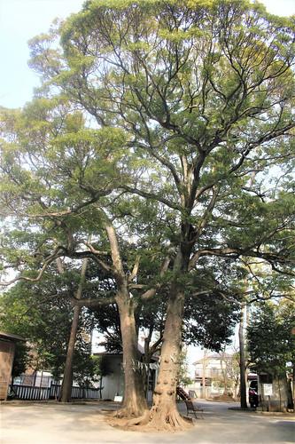 narashinoohara-gosyuin02016