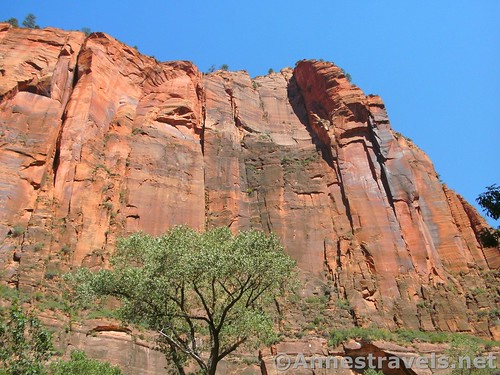 Cliffs near the trailhead for the Zion Narrows in Zion National Park, Utah