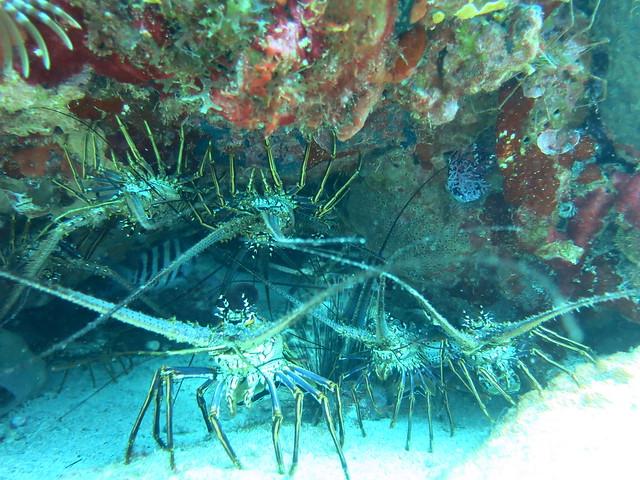 Burgos Reef 062