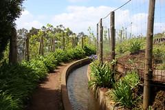 Madeira 2016 - 1. Tag Anreise, 2.Tag Calheta - Prazeres, Levada Nova