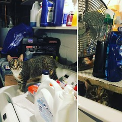 Last week Sumi was very ready to ?help? with laundry.