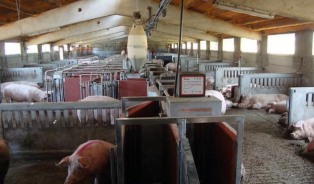 Detalle de una granja española de porcino.