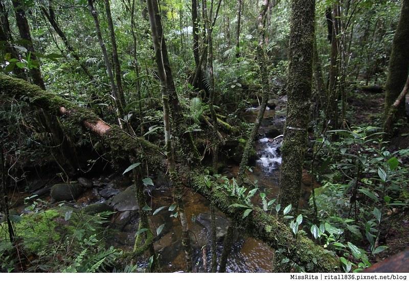 馬來西亞自由行 馬來西亞 沙巴 沙巴自由行 沙巴神山 神山公園 KinabaluPark Nabalu PORINGHOTSPRINGS 亞庇 波令溫泉 klook 客路 客路沙巴 客路自由行 客路沙巴行程19