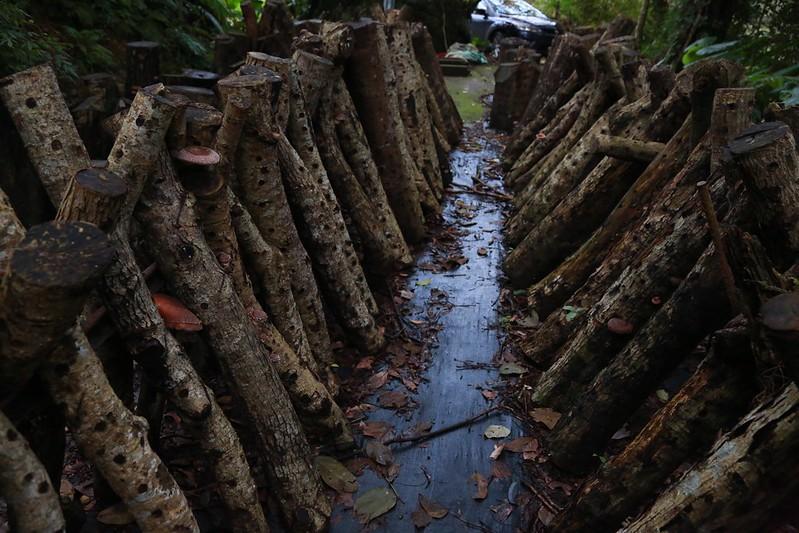 檜木香菇區