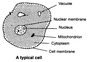 ncert-solutions-for-class-8-science-cell-structure-and-functions-1