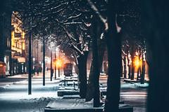 Snowing | Kaunas, Lithuania