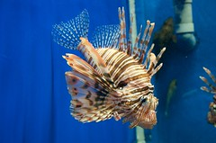 Shirahama Aquarium, Shirahama, Japan