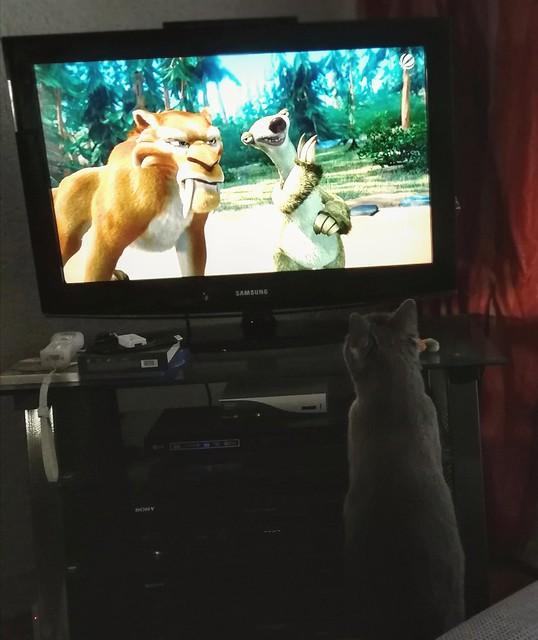 Our cat Siva in love?