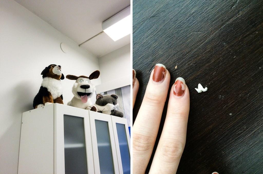 elämä kahden koiran kanssa-61-tile