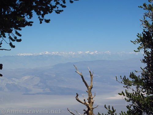 The High Sierras through a break in the Bristlecones along the Telescope Peak Trail in Death Valley National Park, California