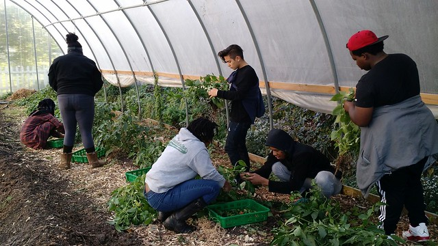 photo of youth farming