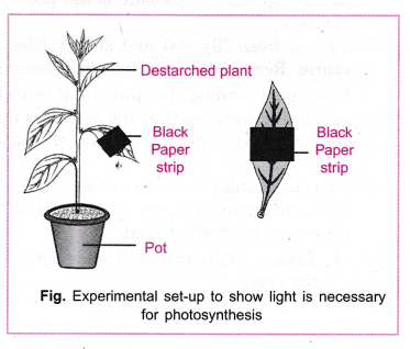 cbse-class-10-science-practical-skills-light-is-necessary-for-photosynthesis-2