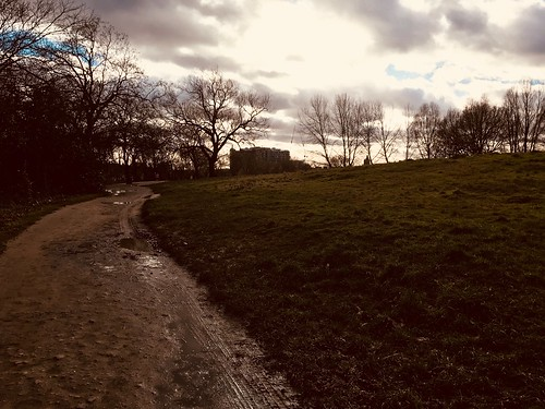 Hampstead Heath, midwinter