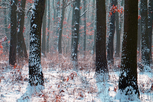 iarnă ilfov românia winter vaduanei brănești landscape peisaj pădure bucurești