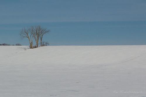 scènedhiver villagedesaintplacide arbre