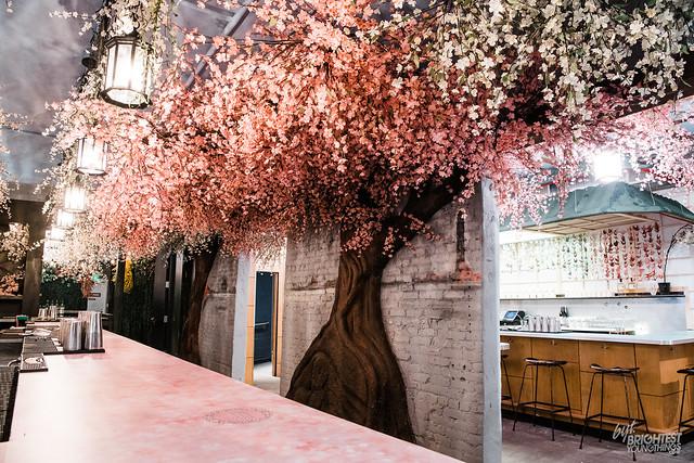 Cherry Blossom PUB-11