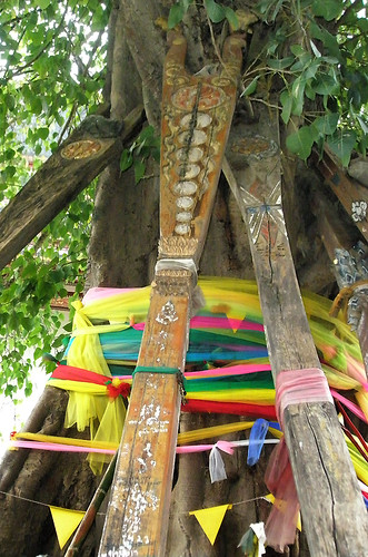Wrapped Bodhi tree at Wat Pho in Bangkok