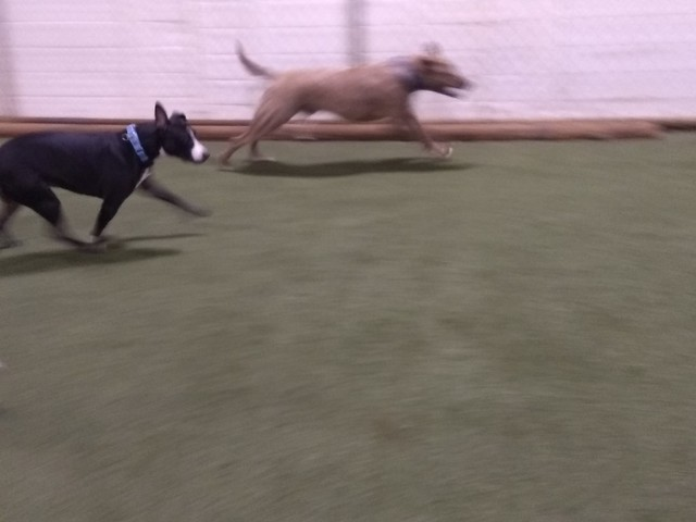01/17/18 Squeaky Toy Catch Part 1!