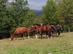20070831 11974 0707 Jakobus Pferde