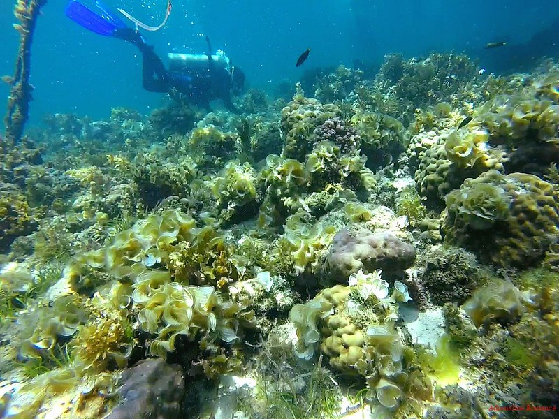 Scuba Diving in Mactan