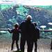 Visitantes observando a los hipopótamos en la cueva de Kitum de BIOPARC Valencia
